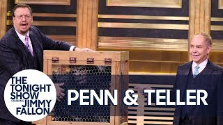Download Penn & Teller Give a Lesson in Misdirection Using a Vanishing Chicken Video