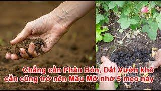 Download Không cần Phân Bón, Đất Vườn khô cằn cũng trở nên Màu Mỡ nhờ 5 mẹo này Video