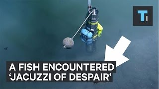 Download What happened when fish swam near 'Jacuzzi of Despair' Video