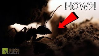 Download TELEPORTING CARPENTER ANTS?! (INCREDIBLE!) Video