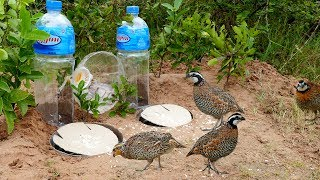 Download Super Creative Deep Hole Bird Trap Using Big Bottle 5L - How to make easy bird trap work 100% Video