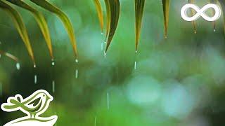 Download Relaxing Music & Soft Rain: Relaxing Piano Music, Sleep Music, Peaceful Music ★148🍀 Video