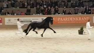 Download Jasper 366 hengstenkeuring 2017!! The King!! Faderpaard! Friesian horse!! Video