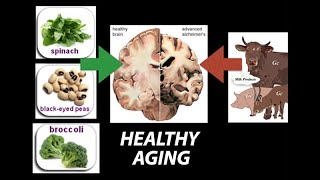 Download Healthy (Nutrient) Wealthy and Wise: Diet for Healthy Aging - Research on Aging Video