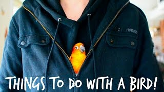 Download Things you can do with a bird!!! Video