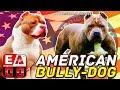 Download EL AMERICAN BULLY y los diferentes TIPOS DE AMERICAN BULLY Video