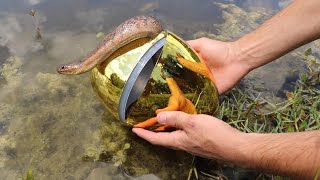 Download GOLDEN EGG Fish Trap Catches Slithery SNAKE!! **JAWS ATTACKS** Video