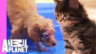 Download The Best Of Curious, Cuddly Kittens And Puppies! | Too Cute! Video