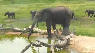 Download Djuma: Elephant herd enjoying the morning - 02/23/19 Video
