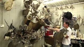 Download BRR - Mesquite Creek Taxidermy Video