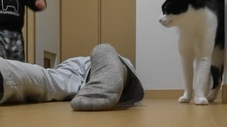Download 家に帰ると父が必ず死んだふりをしています。 -Cat Owner plays dead with hamburger- Video