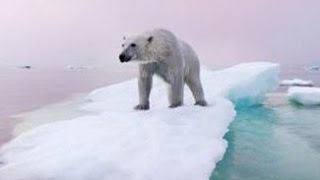 Download Polar Bears & Climate Change Video