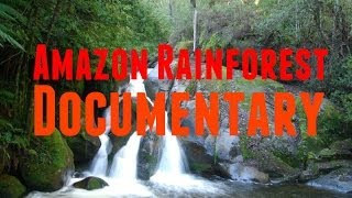 Download Amazon Rainforest Documentary: Brazil Nut and Timber Production Under Threat in Amazon Rainforest Video