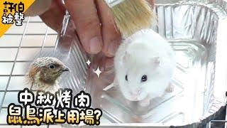 Download 《倉鼠人》中秋烤肉!鼠與鳥終於派上用場?許伯被整!│呆萌日記07│ Video
