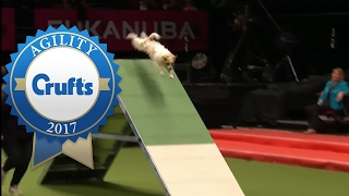 Download Rescue Dog Agility (ft. Olly the Jack Russell!) | Crufts 2017 Video