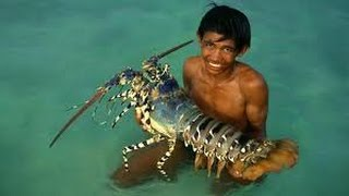 Download LOBSTER CURRY MAKING INDIAN STYLE | HOW TO MAKE LOBSTER RECIPES Video