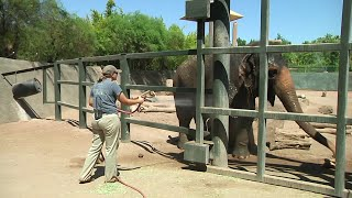 Download Phoenix Zoo beats the heat with water and ice Video