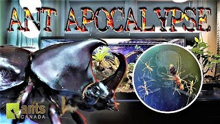 Download Ant Apocalypse Stopped by a Rhino Beetle Video