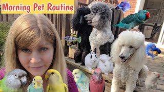 Download Morning Routine with my Pets | Feeding my Pets Breakfast Video