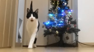 Download 玄関開けたらクリスマスにゃんこ - Meowy Christmas - Video