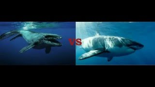 Download mosasaurus vs megalodon Video