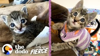 Download This Tiny Kitten Wears Socks As Sweaters | The Dodo Little But Fierce Video