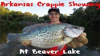 Download Crappie Fishing Arkansas Beaver Lake Video