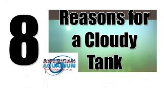 Download 8 Reasons Cloudy Aquarium Water | Murky Water & Gray Fish Tank Video