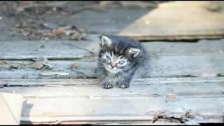 Download Tiny Kittens - Nano Tribute Video