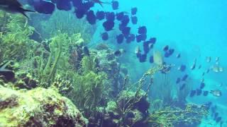 Download Scuba Diving Bonaire, Cliff, HD, dive site Video