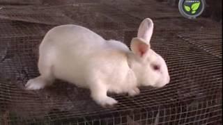 Download Rabbit Farming Video