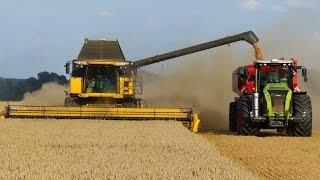 Download Wielkie Żniwa Stary Jaworów 2014 Milikowice | Big Harvest in Poland | 5x Lexion | 2x CR 9090 Video