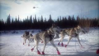Download Broken record, broken dreams: An Iditarod story Video