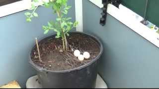 Download Гнездо на балконе Video