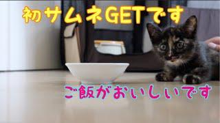 Download [保護3日目] 鳴きながらご飯を食べる赤ちゃん猫とすっかりお姉さんな子猫 Video
