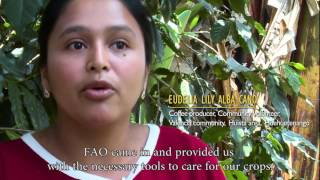 Download Evaluation of FAO's contribution to Guatemala Video