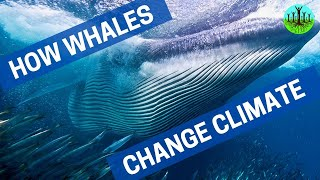 Download How Whales Change Climate Video
