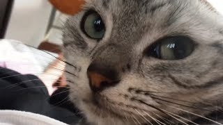 Download 帰宅するなり...猫が今日一日の出来事を興奮気味に説明してくれた!-Cat Talks excitedly about How Scared of Stranger Outside of Window Video