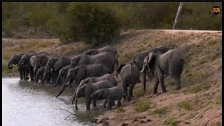 Download Pt 1 Safari Live's Sunrise Safari Drive at 5:30 AM on Jan 22, 2018 Video