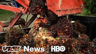 Download Norway Learned To Stop Eating The Rainforest (HBO) Video