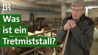 Download Mastbullen auf Stroh: Was ist ein Tretmiststall?   Unser Land   BR Fernsehen Video