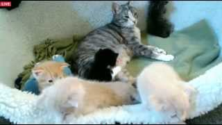 Download Tiny Kittens Shellys brief visit with Eve Video
