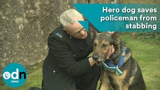 Download Hero dog saves policeman from stabbing Video
