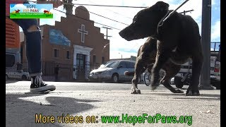 Download Homeless dog eating from a pile of trash finally gets rescued by Hope For Paws. Video