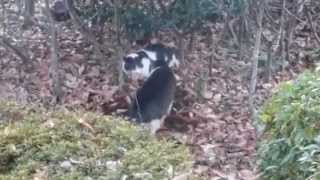 Download 【野良猫】喧嘩しそうな猫を鳴き声アプリで止めてみた!【地域猫】 Video