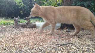 Download Backyard Wildlife: Uninvited Cat Shows up at the Feeder Video