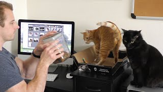 Download How To Survive Working With Cats! Video