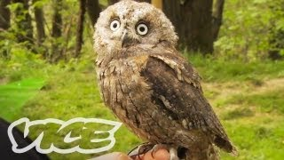 Download Cute Owls! | The Cute Show Video