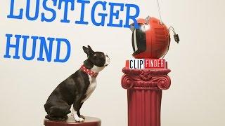 Download Hund reagiert auf Youtube Video! Lustige Reaktion des Hundes! Retriever! Lustige Videos 2015! Funny Video