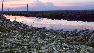 Download CNN Explains: Deforestation Video